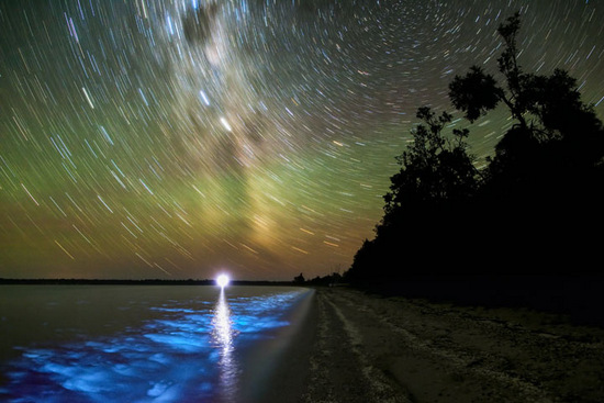 Bioluminescence and cosmic light