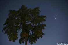 Venus and the Pleiades at Twilight