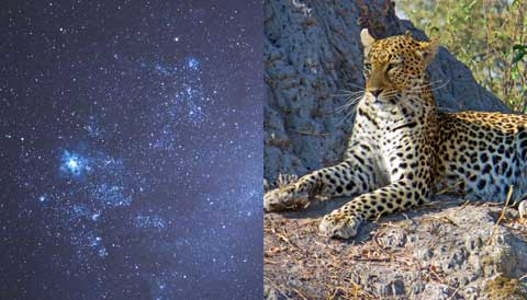 Stargazing and Safari Tour with Sky & Telescope