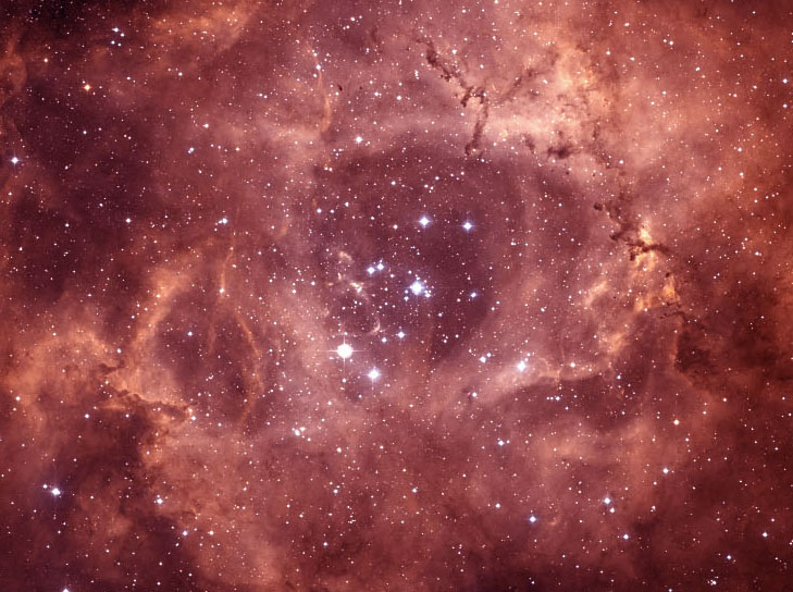 Starlit rose