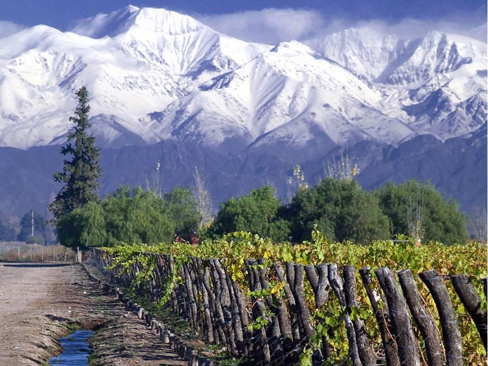 Concha y Toro vineyard in Maipo Valley