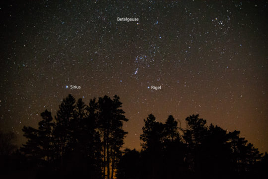 Picture of Orion over treetops