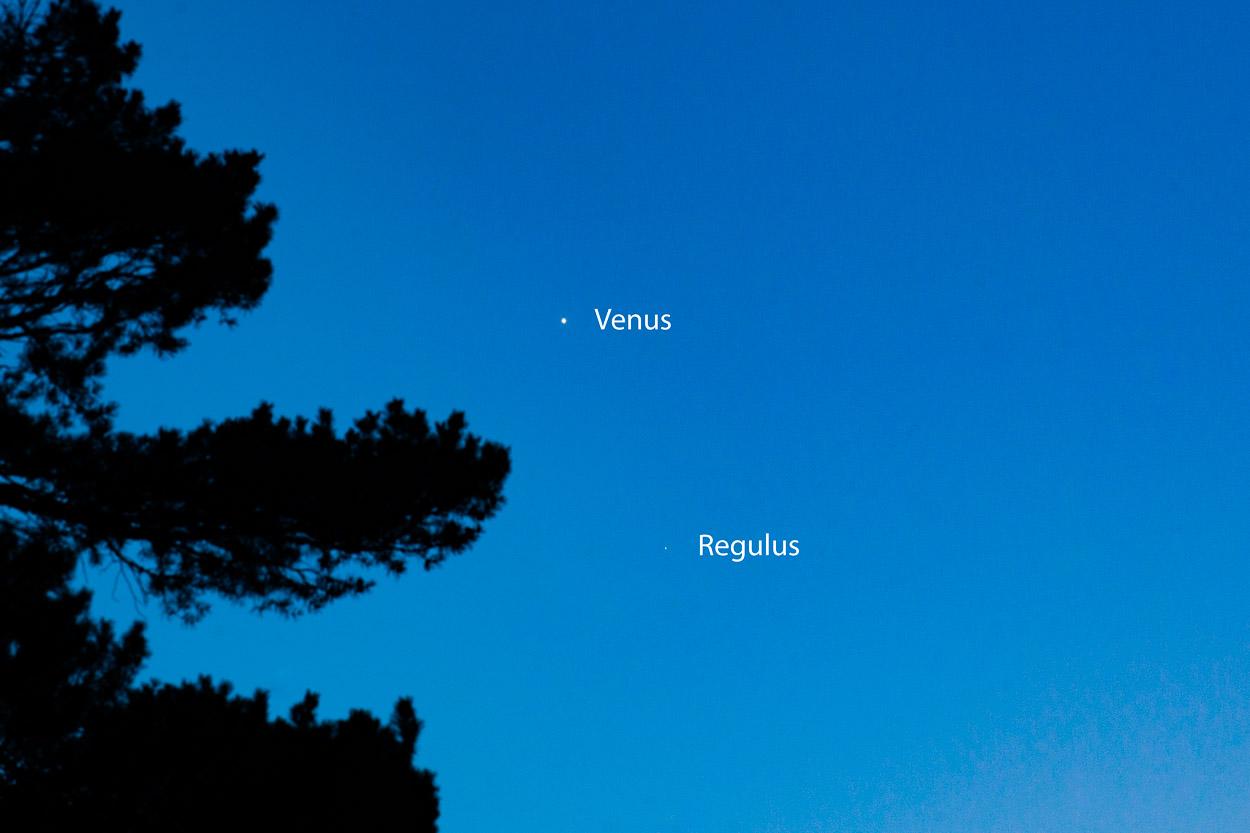 Regulus-Venus conjunction