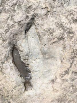 Eubrontes footprints