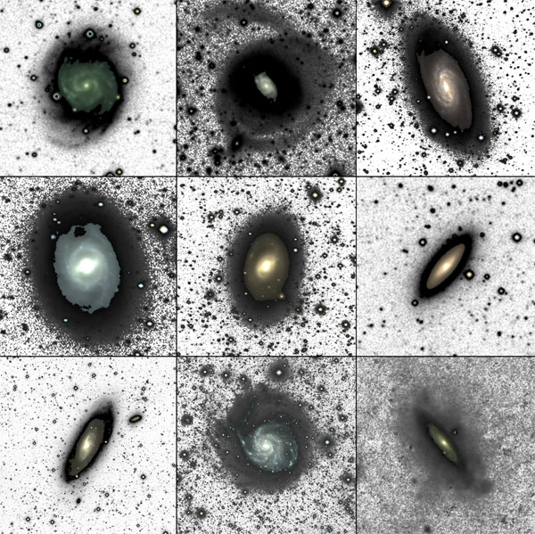Dragonfly Nearby Galaxies Survey