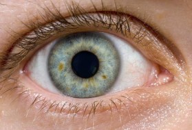 Two kinds of vision receptors line the retina