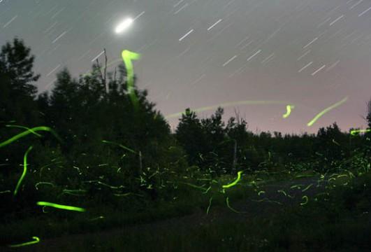 Jove watches over the fireflies