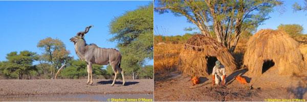 Kudu and Bushmen village