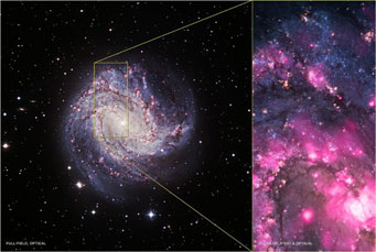 Ultraluminous X-ray source in spiral galaxy M83