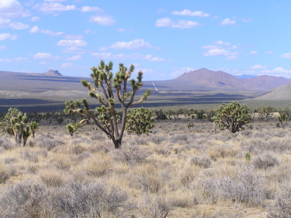 Visit Mojave National Preserve on Sky & Telescope's astronomy tour