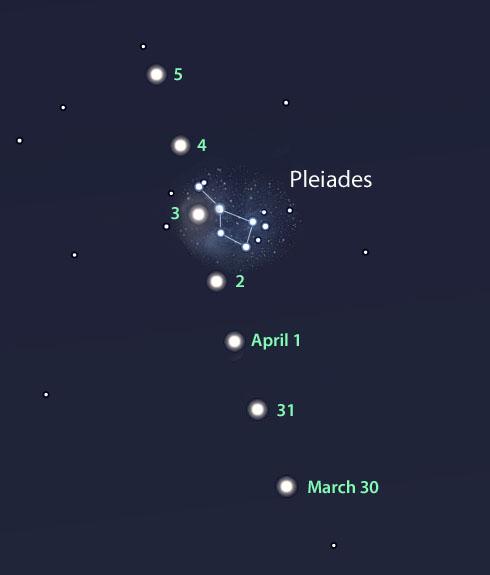 Venus in the Pleiades