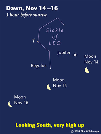 The Moon with Jupiter and the Sickle of Leo in early dawn, Nov. 14-16, 2014.