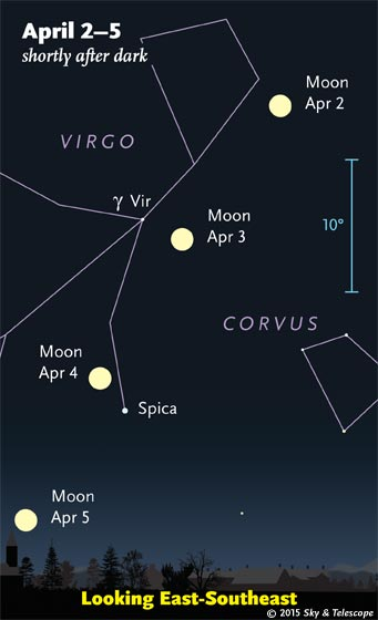 The full Moon moves through Virgo past Gamma Virginis and Spica. The blue 10° scale bar is about the width of your fist at arm's length.
