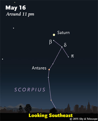 Saturn shines above upper Scorpius late these evenings.