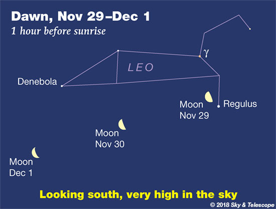 Dawn Moon and Regulus, Nov. 20 - Dec. 1, 2018