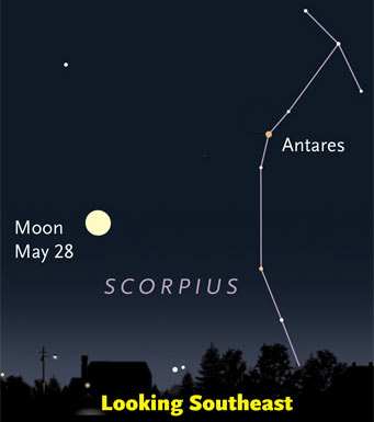 Moon and Scorpius rising in early evening, Friday May 28th
