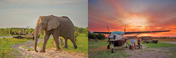 Elephant in Savute camp and aircraft