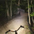 Woods lit by flashlight