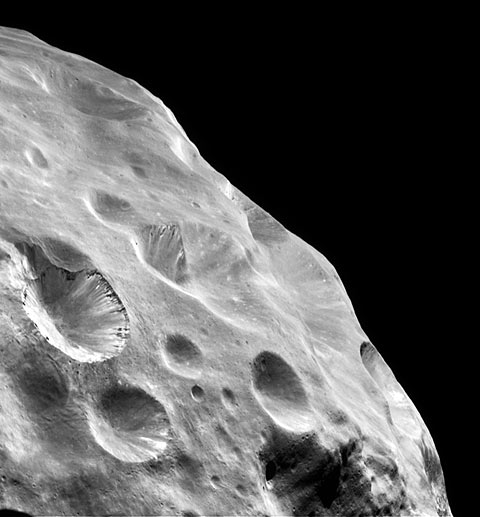 Phoebe; view across limb