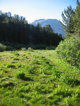 Meadow in the Sierra Nevada