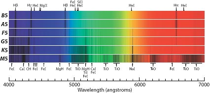 Stellar spectra from hot to cool. A star's temperature largely determines which dark absorption lines appear in its spectrum.