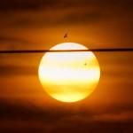 venus_bird