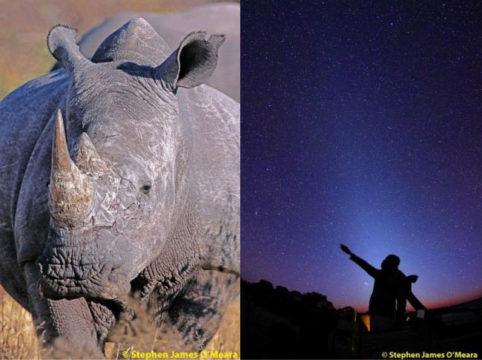 White Rhino, Zodiacal light